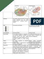 Cuadro Comparativo de Células Eucariotas y Procariotas