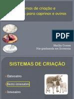 sistemasdecriao-Ovinos e caprinos