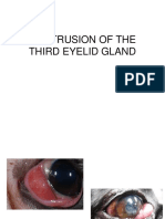 Lecture 6 Cherry Eye - Copy
