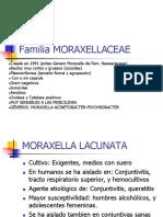 Cap. 4 Familia Moraxelaceae