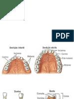 UFCD 3257 Denticao Infantil