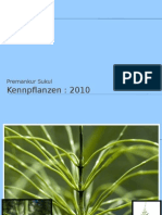Kennpflanzen