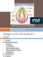 odontogenesis-111116051748-phpapp02
