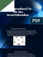 Invertebrates Reproduction for 5 th.primary.
