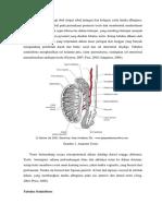 Anatomi Dan Hidtologi Testis