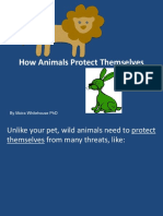 Animal Protection Ada Pation s Teach