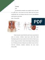 Anatomi Dan Fisiologi Ggk