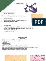 2) Streptococcus