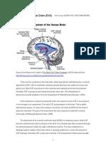 External Ventricular Drain