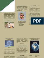ecologia-enfermedades metaxenicas - tripctico.docx