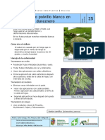 Postal Para Plantas