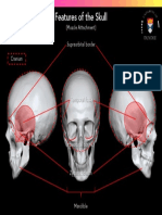 Features of the Skull Muscle Attachment