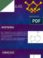 Actividad Chem