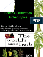 Banana Cultivation Technologies