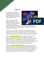 Webs de Juegos de Ingenio_El Nuevo Diario