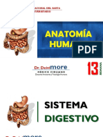 Semana 13 (Sistema Digestivo)