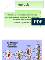 3 Meiosis.ppt