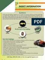 Ladybug Info Sheet_web