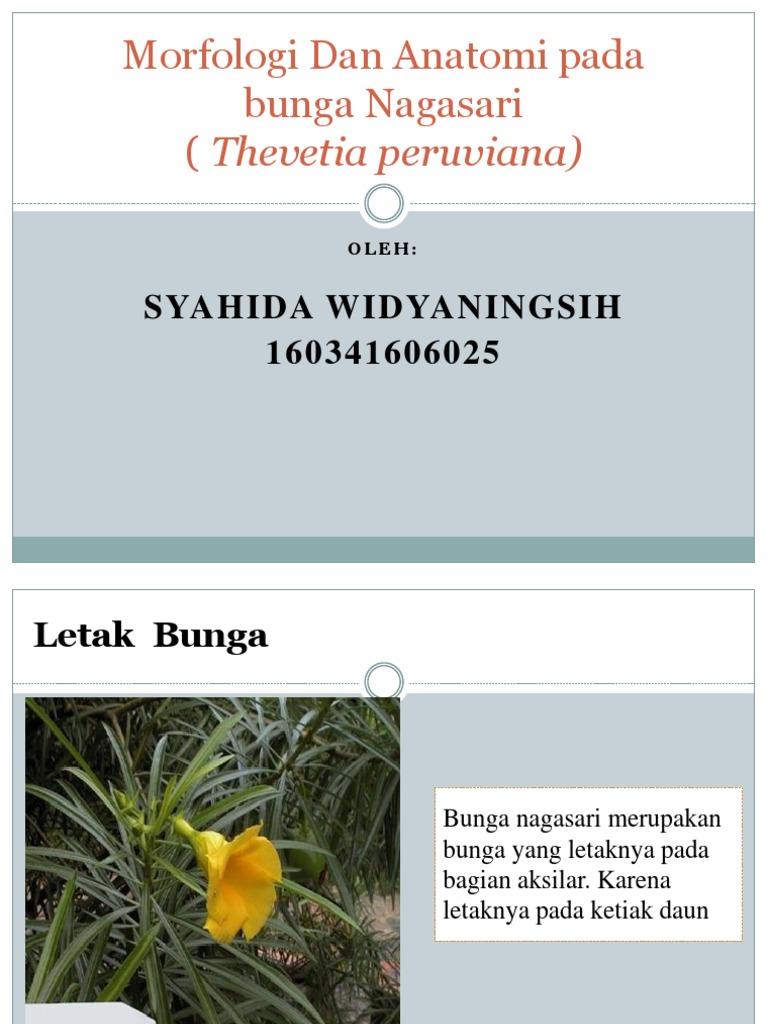 Morfologi Dan Anatomi Pada Bunga Thevetia Peruviana Pptx
