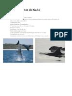 Os Golfinhos Do Sado