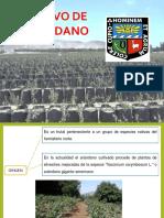 Exposicion de Arandanos