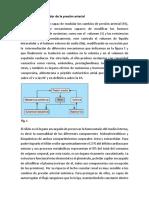 Trabajo de Morfofisiologia Humana