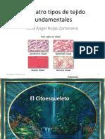 Citoesqueleto y Tejido Epitelial 2016