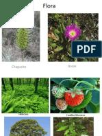 flora y fauna de la region del bio bio.pptx