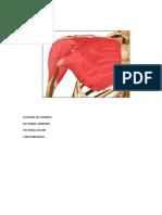 Musculos Flexopres Extensores Rot Ext y Int Abd y Add de Hombro Traumato Imprimir