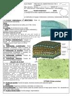 240176931-Practica-de-Laboratorio-Cta-4-Tejidos-Vegetales.docx