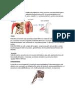 Musculos Del Hombro Origen e Insercion