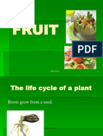 07.Fruit and Seed Krt1