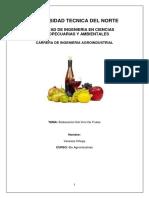 Informe De  Vino