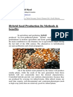 Hybrid Seed Production