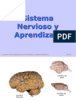 0001 EDU Sistema Nervioso y Aprendizaje