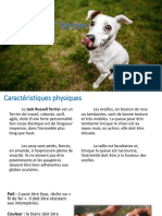 Jack Russel terrier2.pptx