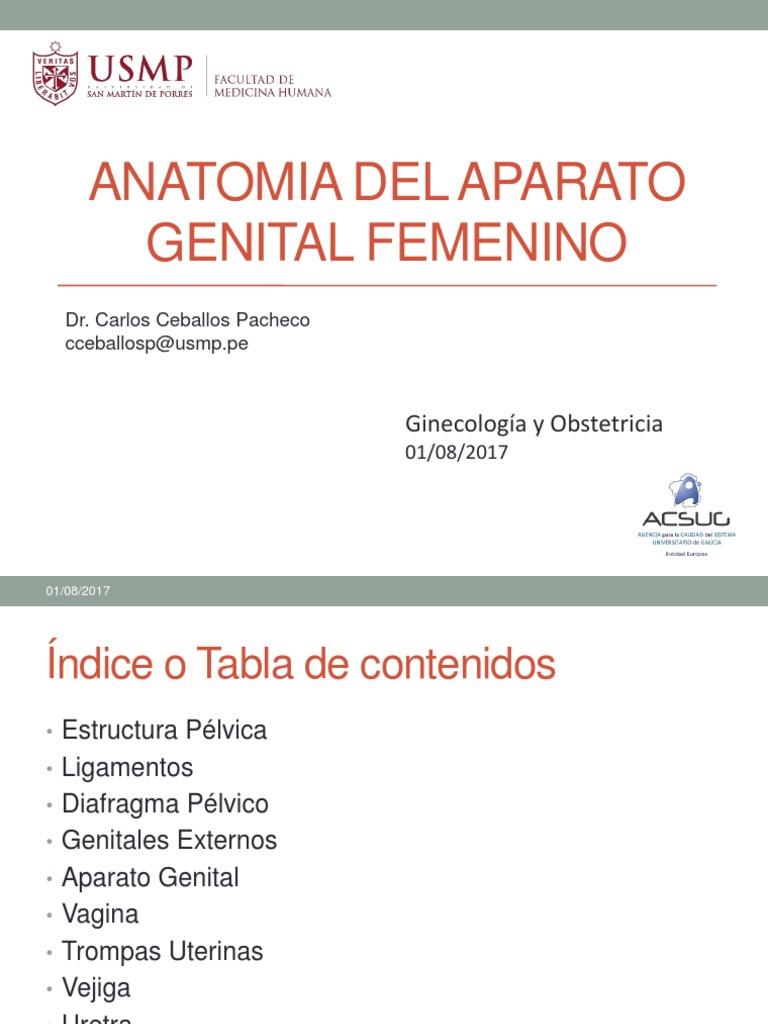 1.ANATOMIA CLASE.ppt