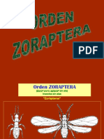 2 Sistematica - Neuroptera (1)