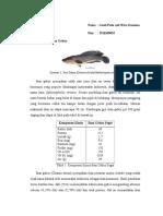 Pangan Fungsional Ikan Gabus