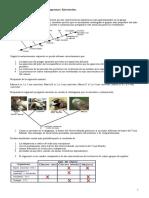 Cladogramas Actividad de Internet2129012794