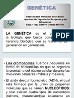 5.- GENETICA.pptx