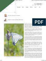Glogov Bijelac Leptir