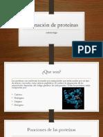Formación de Proteínas