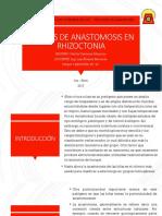 Grupos de Anastomosis en Rhizoctonia