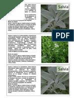 tarjetas plantas medicinales
