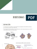 Ríbosomas