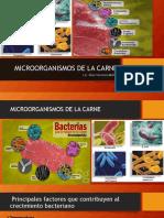 MICROORGANISMOS CARNE.pptx