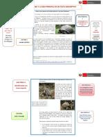 Tema -Subtema e Idea Principal