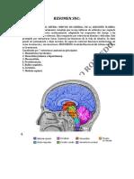 RESUMEN Sistema Nervioso Central.