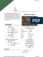 Butor étoile.pdf